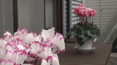 ハイビジョンビデオカメラで撮影した映像1